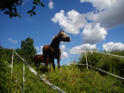 rideleir-2012 7702768490 o